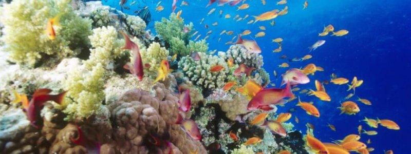 koraalMetVis2